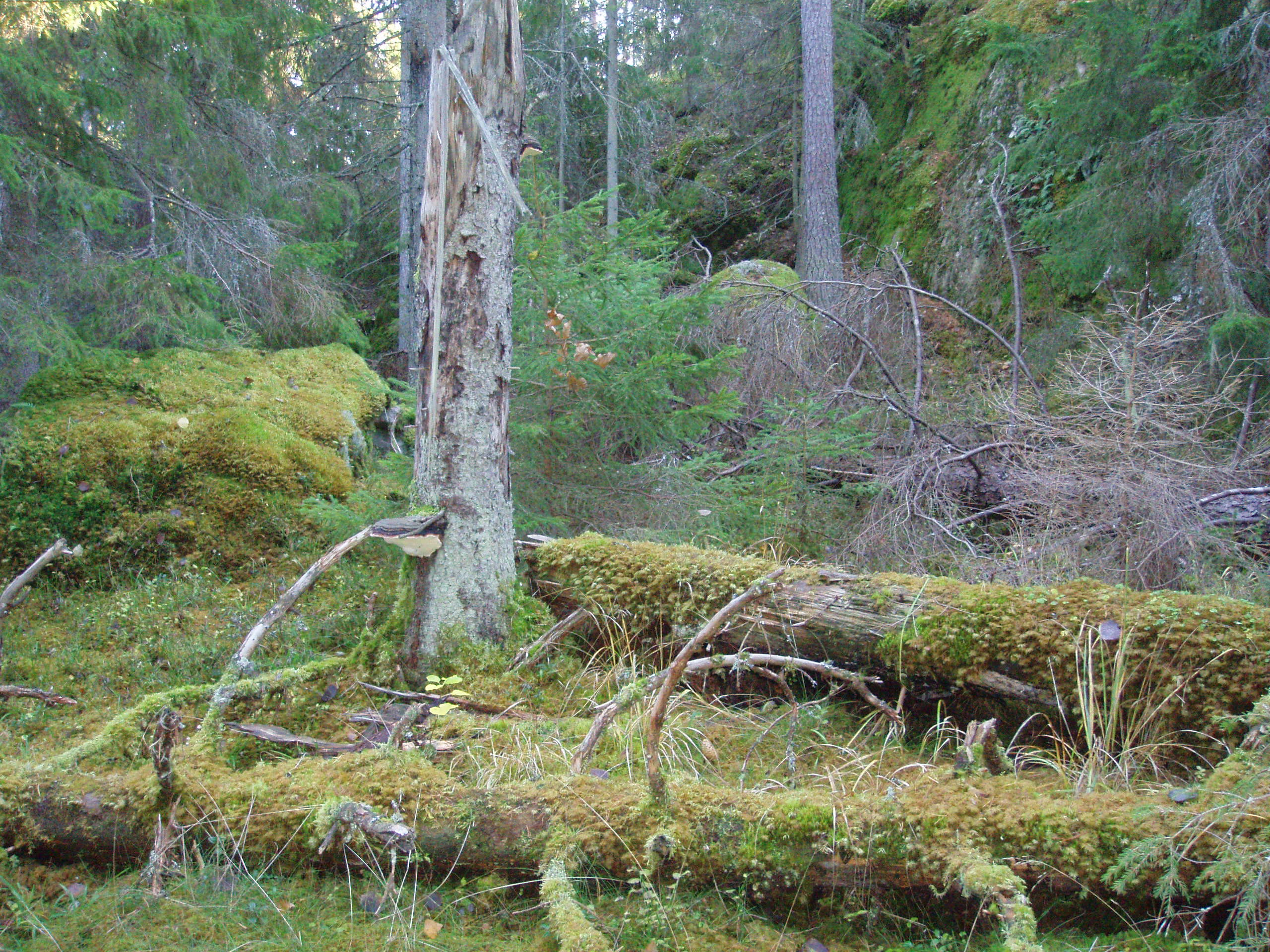 Reserva natural de Grönudde