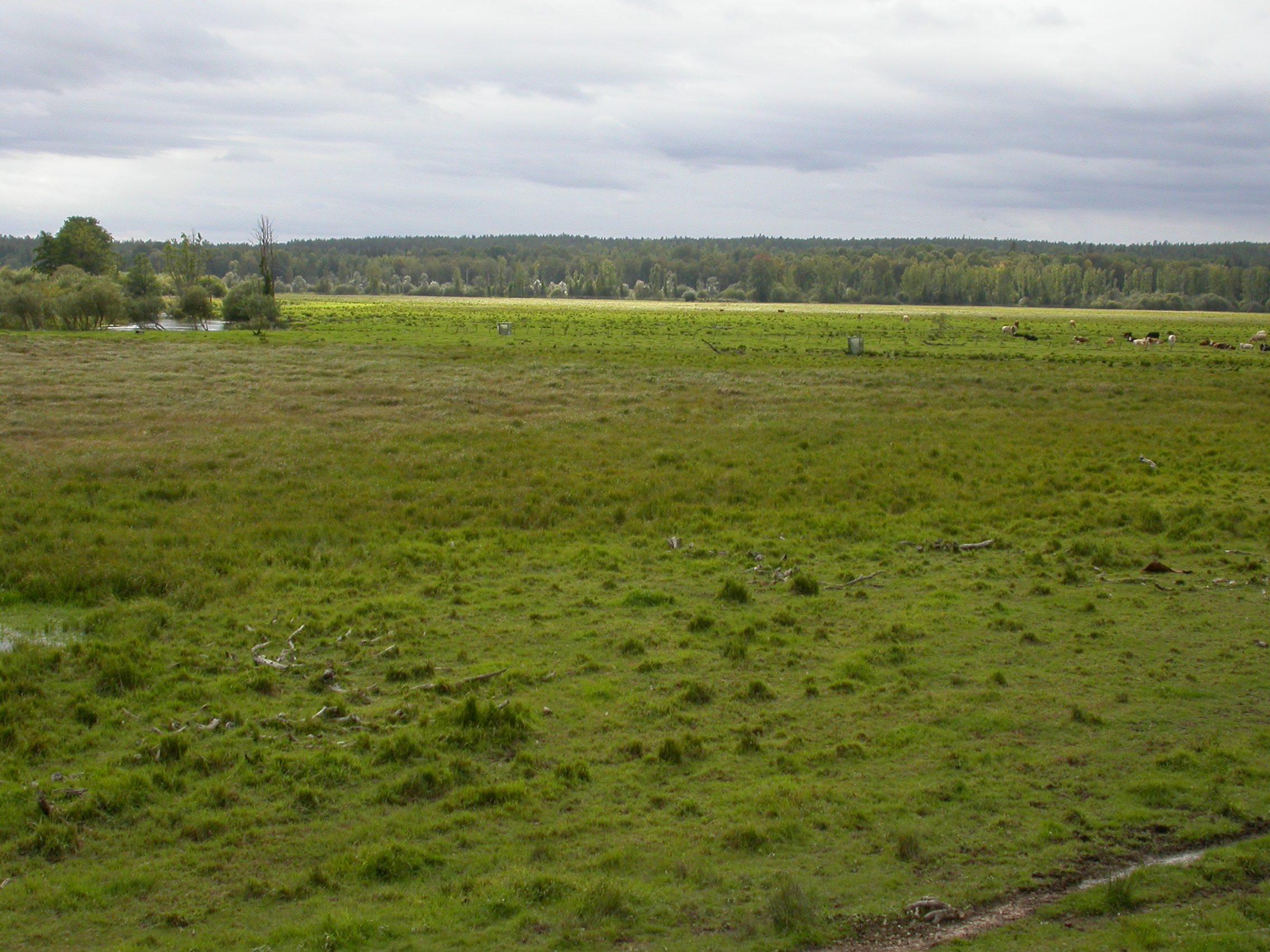 Alkärrets naturreservat