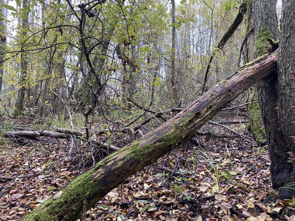 Alkärret, ett naturreservat i Hultsfred