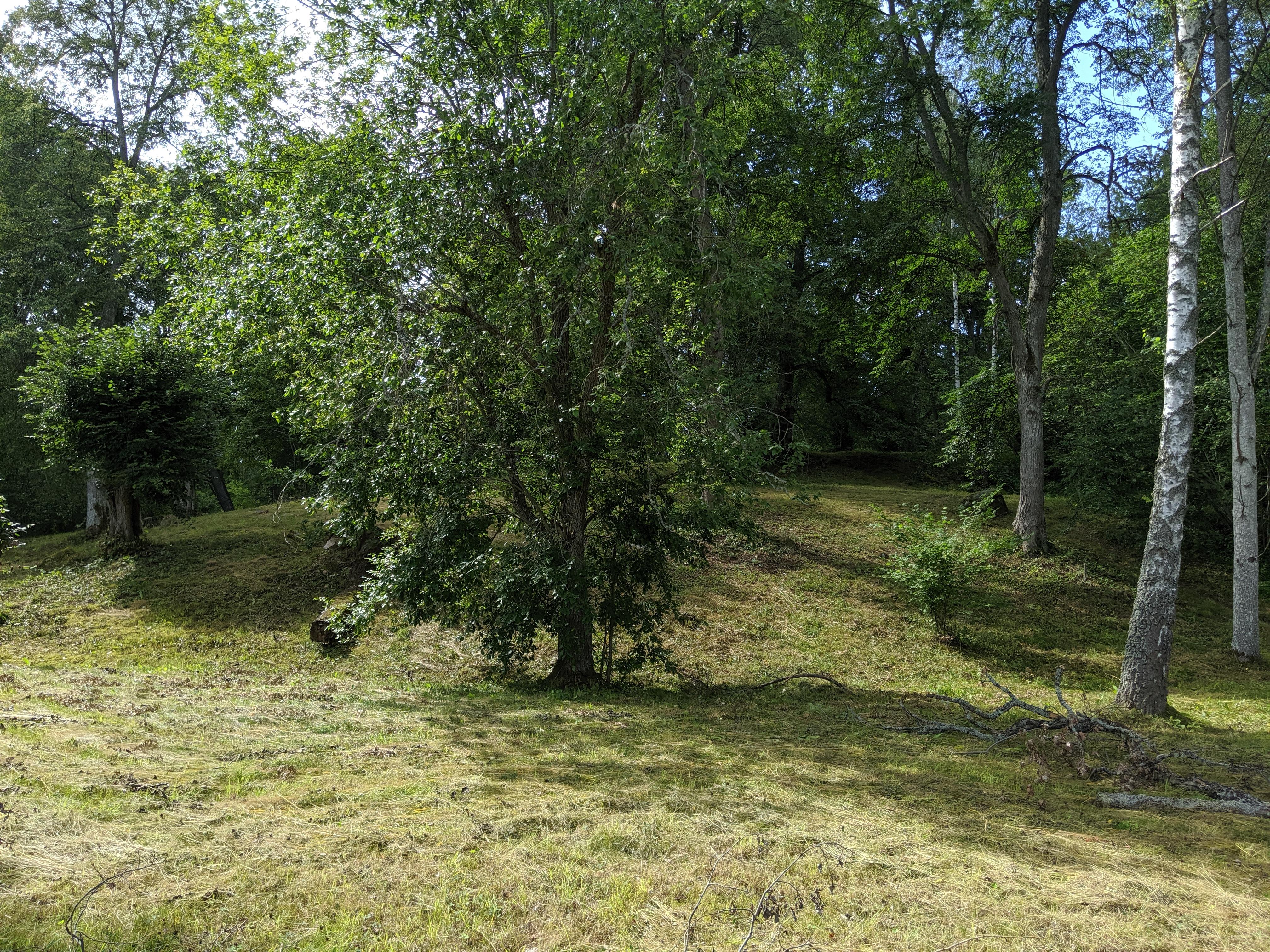 Länsmansgårdsängens naturreservat