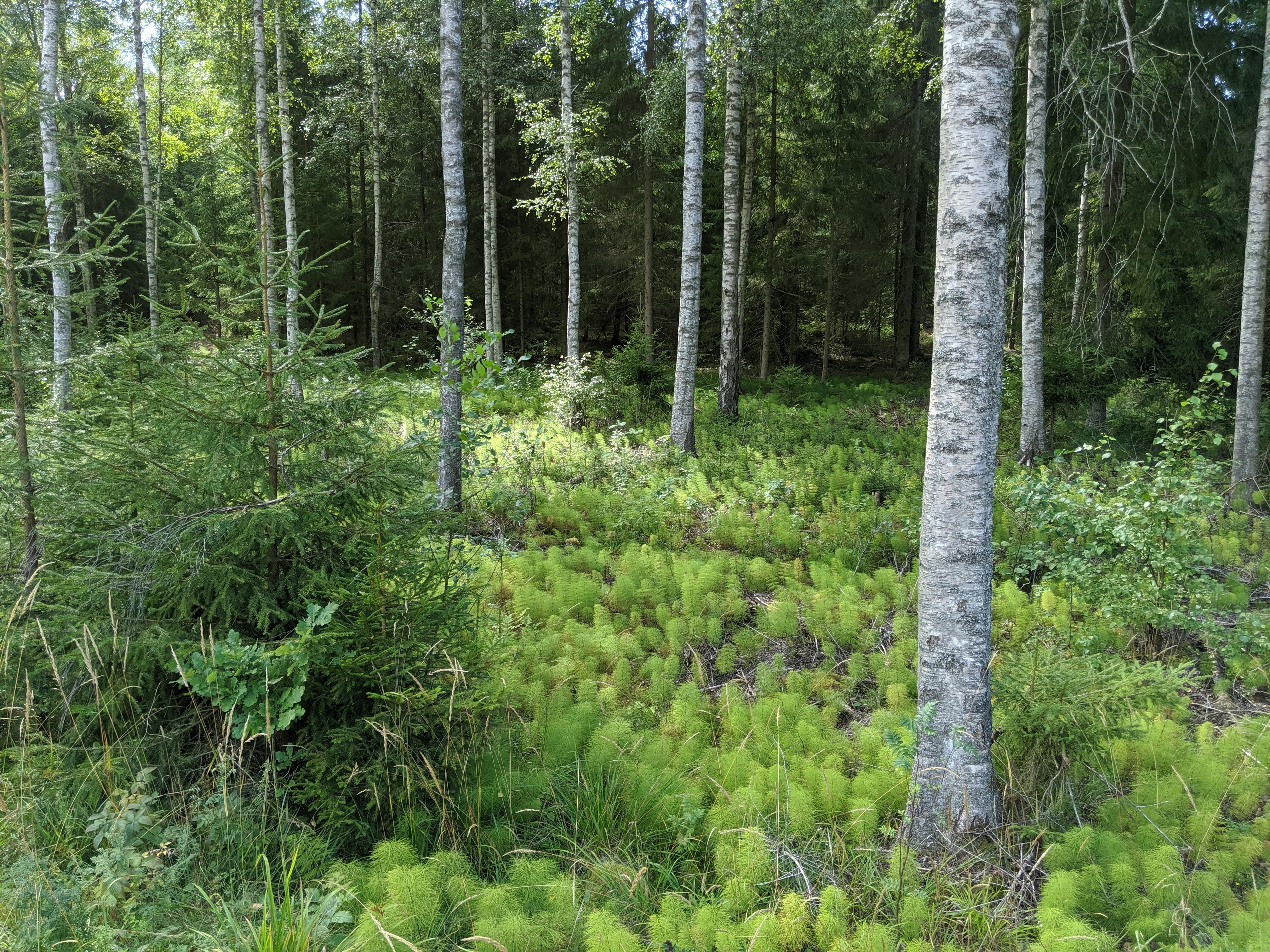 Kraskögle naturreservat