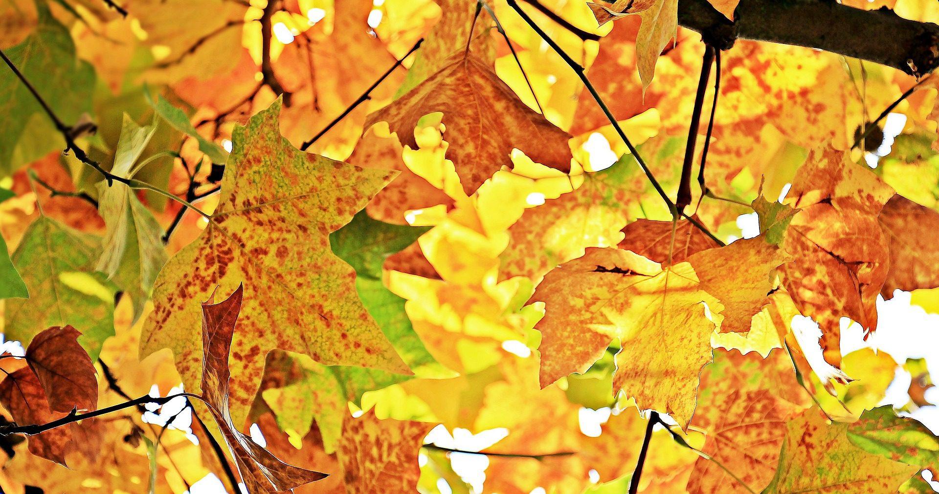 autumn 1655915 1920