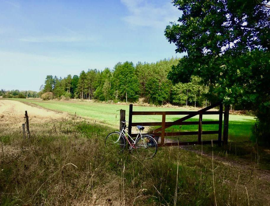 Cykel vid grind på äng