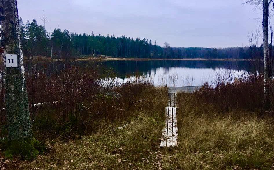 Liten brygga i en fiskesjö i skogen