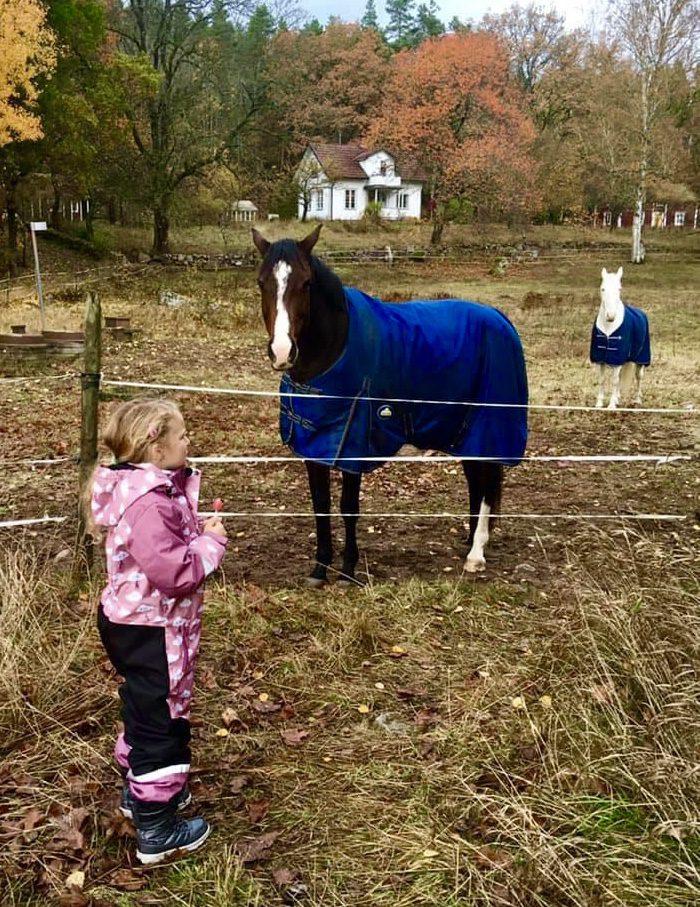 Barn och hästar i hage