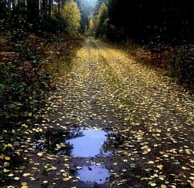 Höstlöv på grusväg ute i skogen