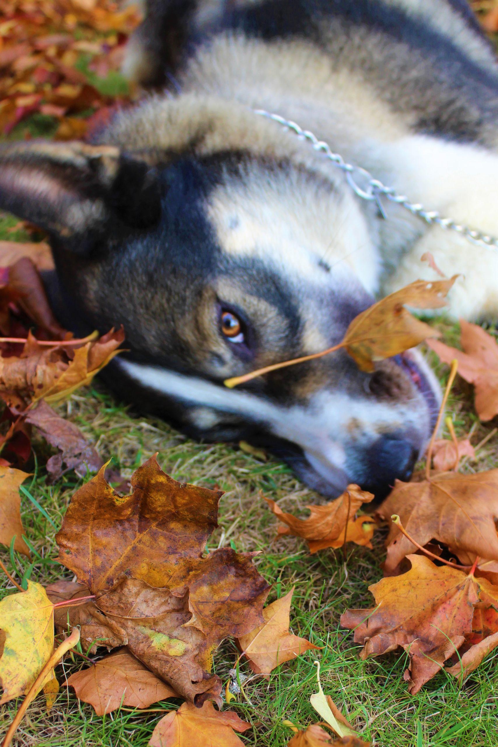 Hundmys i lovhogen Emilia Jonsson scaled