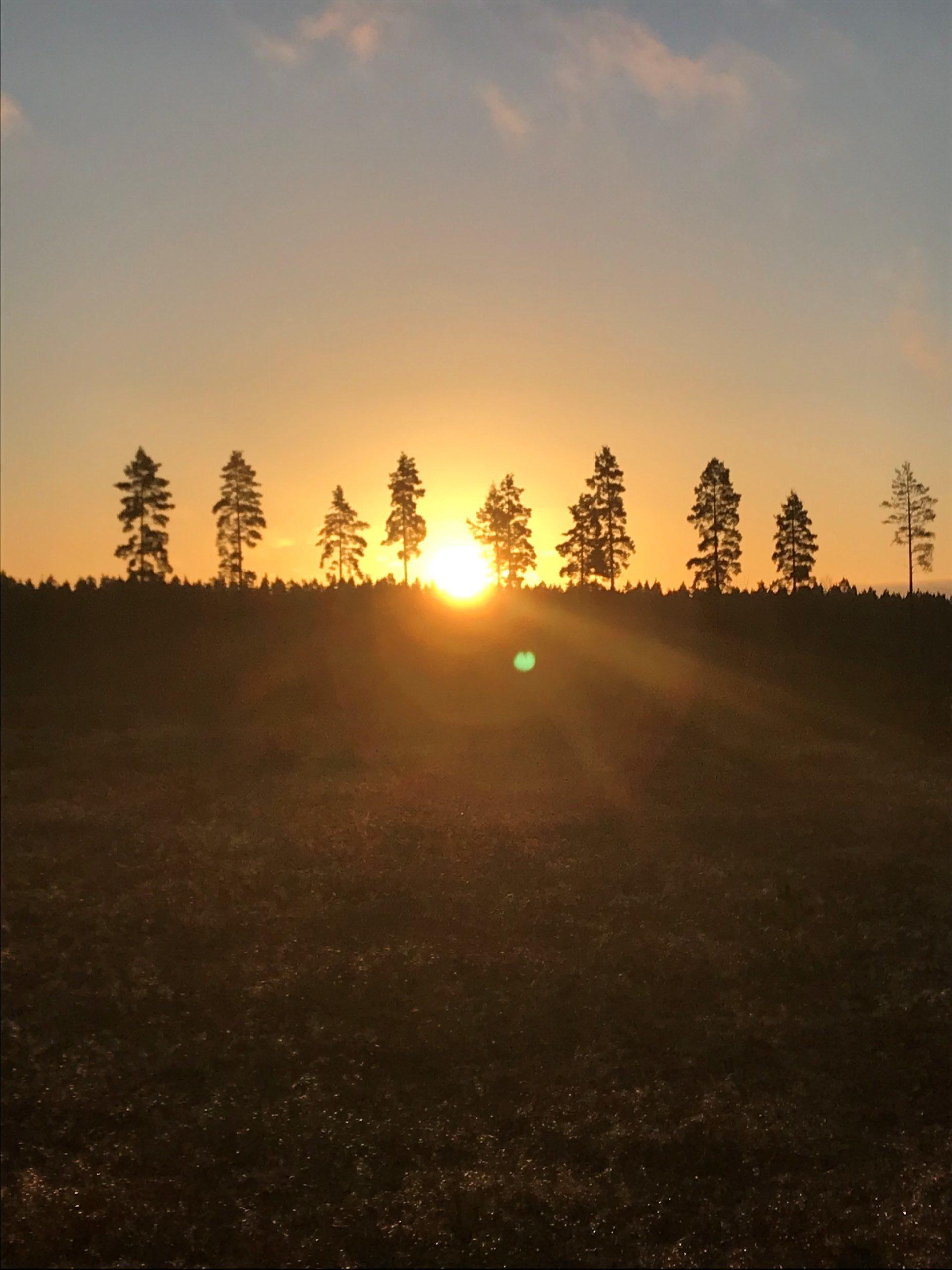 Solnedgång vid kalhygge