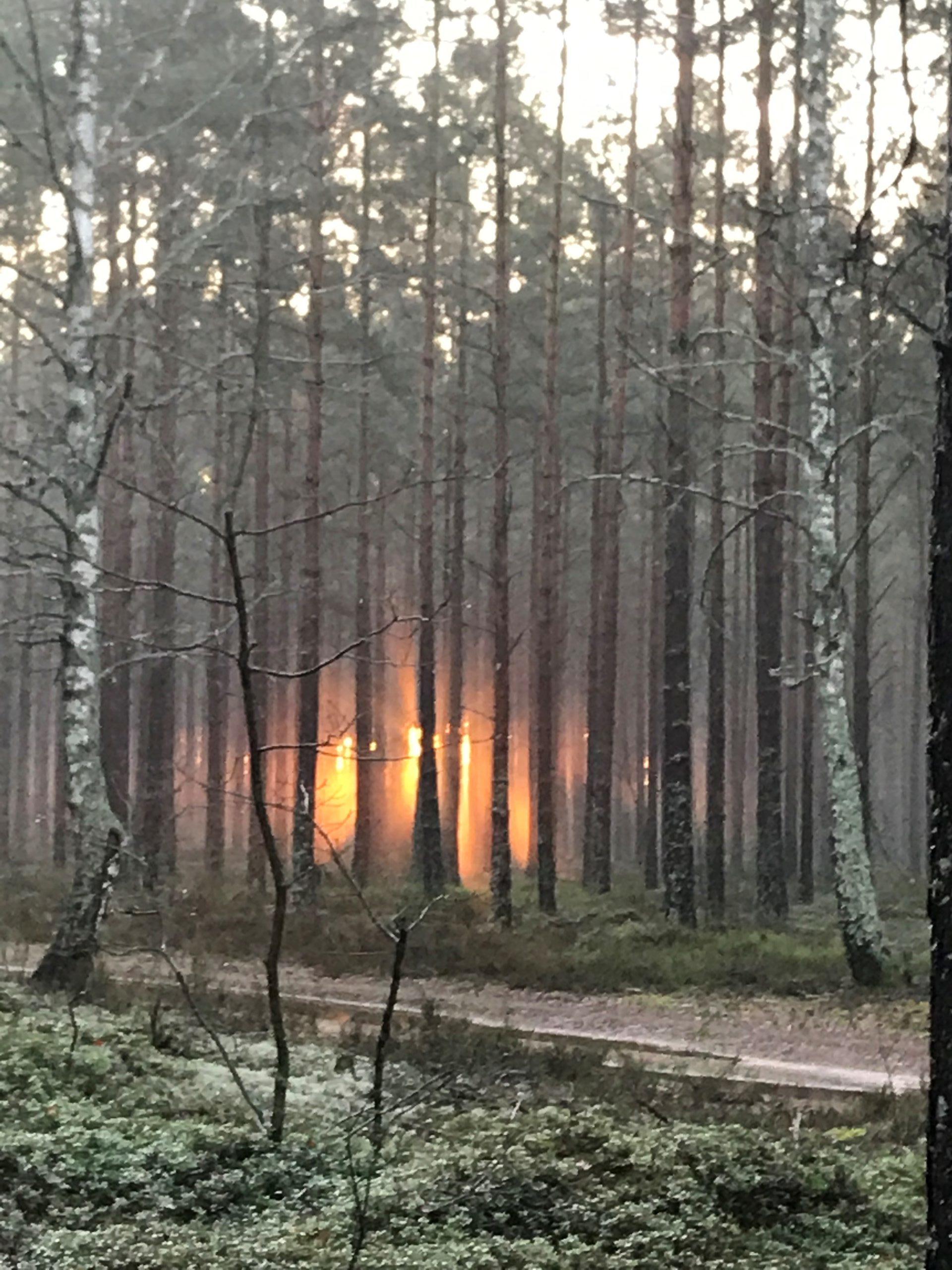 Skogspromenad med tidig morgonsol