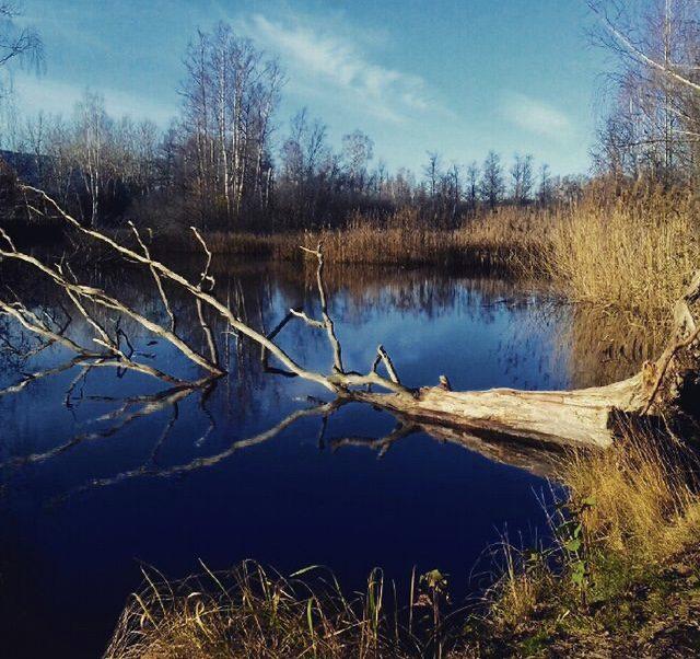 Nedfallet träd i vattnet en solig höstdag
