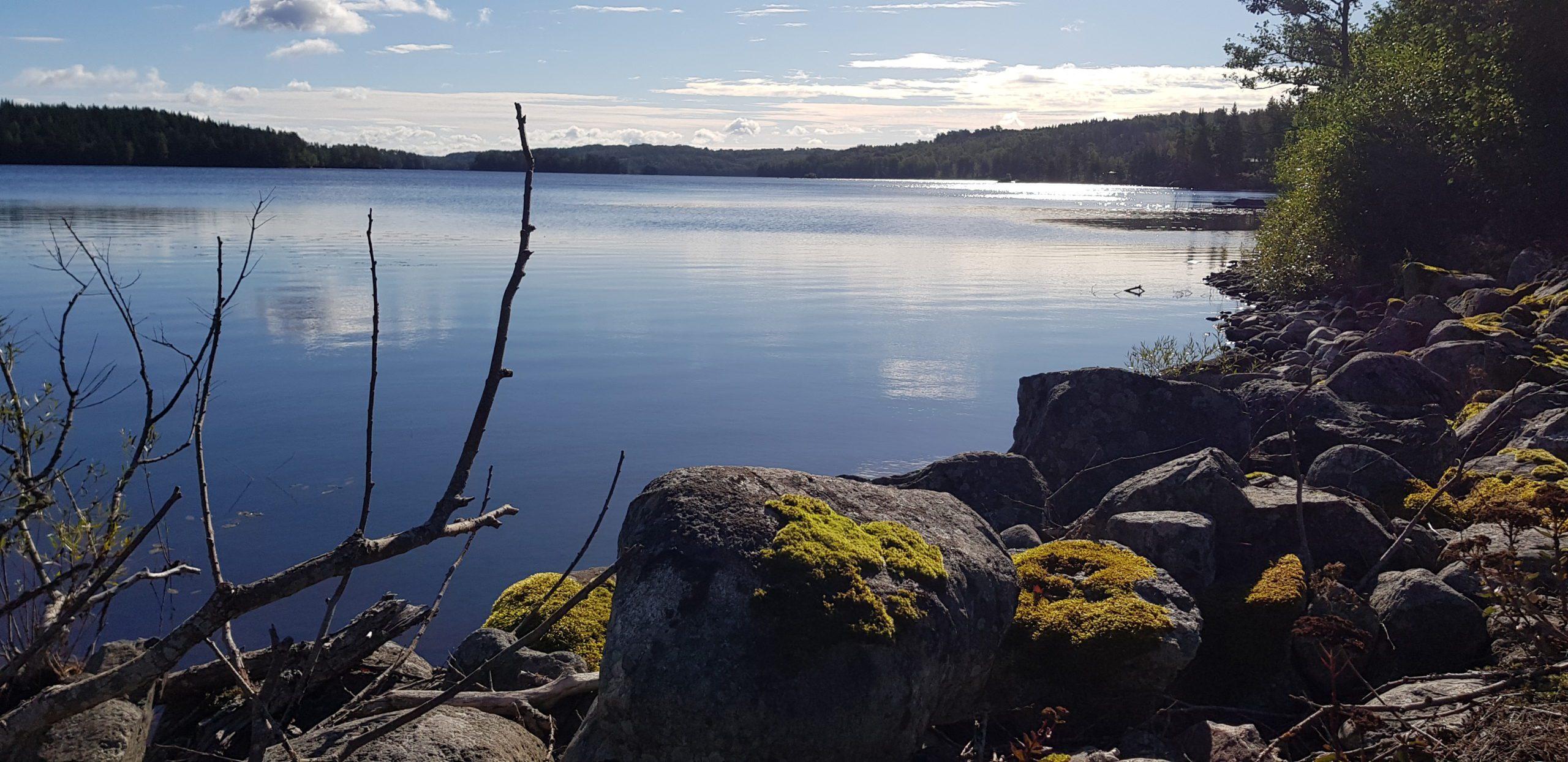 Stenrös längs ett soligt Virserumssjön