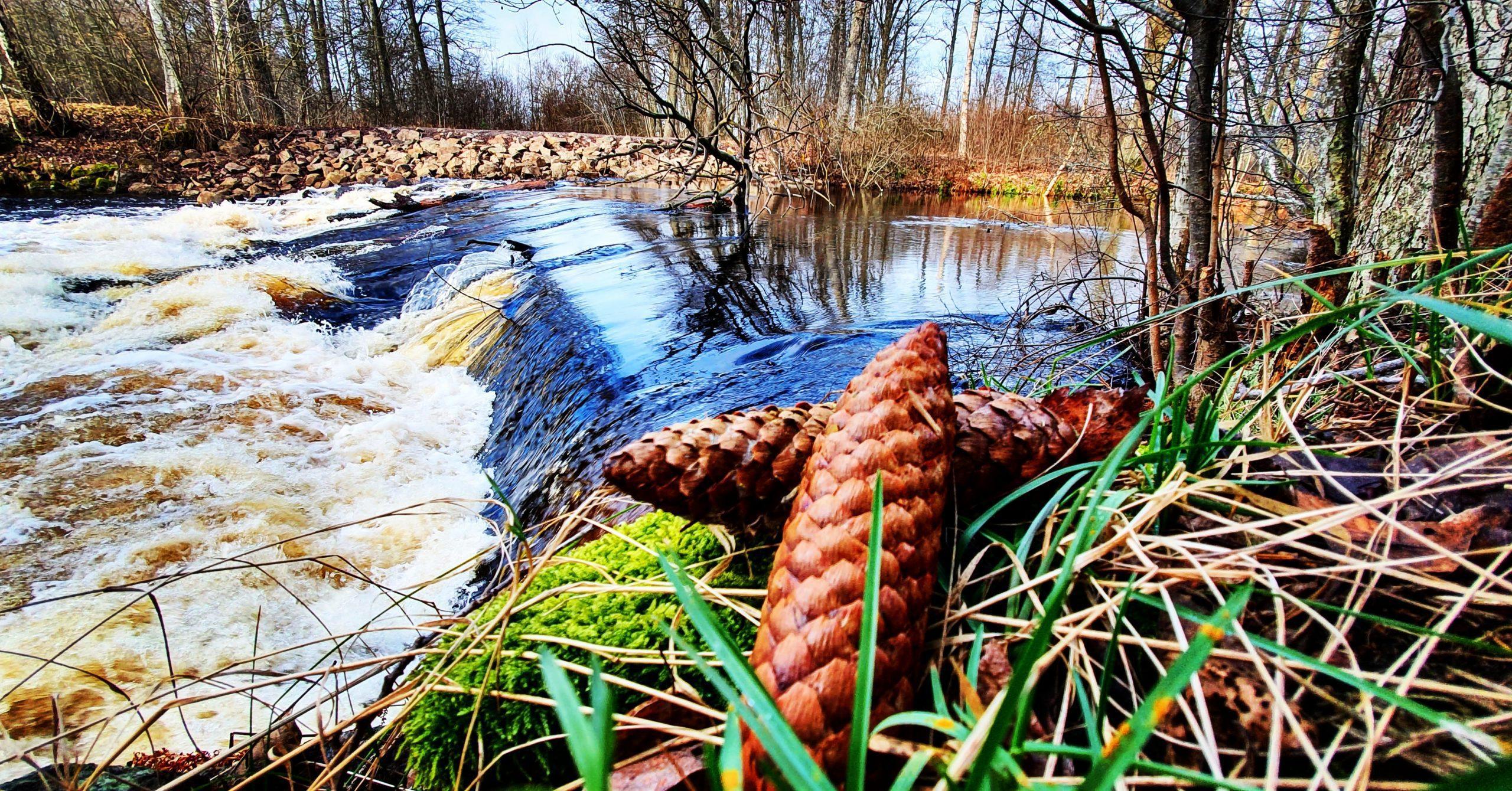 Strömmande vatten en solig höstdag