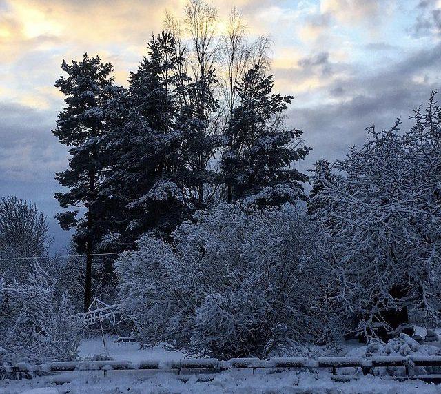 Vinterdag med snö mot skogen